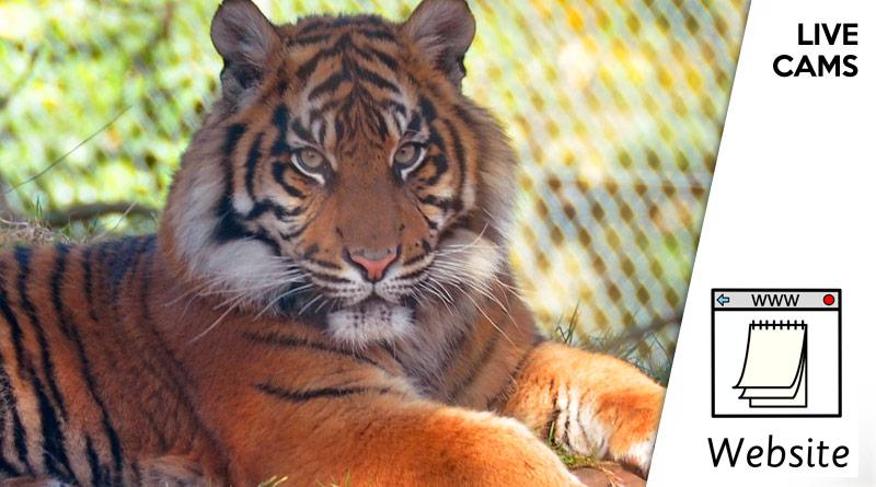 Zoo / Aquarium Live Cams