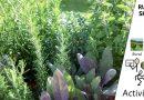 Rural Skills – Herbs