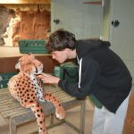 next time the cheetah will be real!
